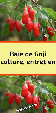 Culture, Vegetables, Food, Gardens, Mediterranean Plants, Plant Cuttings, Balcony Gardening, Vegetables Garden, Interview
