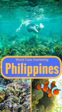 World Class Snorkeling off Culion Island, Philippines. During our sea safari in the Calamian Islands of the Philippines, we stopped to snorkel at many places but were left pretty unimpressed, the visions of Red Beach imprinted in our minds. Then we stopped in a shallow spot off the coast of Culion Island. Click to read the full adventure travel blog post at http://www.divergenttravelers.com/crowning-glory-reef-world-class-snorkeling-off-culion-island/