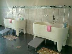 Dog Grooming Baths - DREAMY!