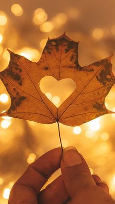 The latest iPhone11, iPhone11 Pro, iPhone 11 Pro Max mobile phone HD wallpapers free download, heart, maple, hand, autumn, macro - Free Wallpaper | Download Free Wallpapers