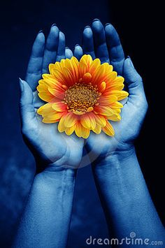 Open female hands keeping a daisy flower as concept for giving life, #flower