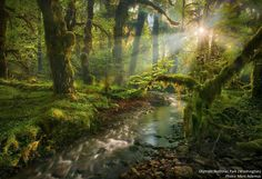 Spirit Garden, Olympic rainforest in Washington state Olympic Rainforest, Enchanted, Cool Pictures, Cool Photos, Pinterest Instagram, Instagram Life, Photo Deco, View Wallpaper, Photo D Art