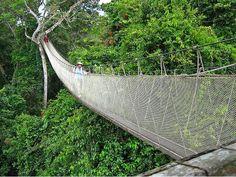 the amazon jungle , Loreto-Peru , asking the pirce,turismovanuatur@gmail.com