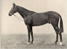 Bois Roussel (FR) 1935-1955 Br.h. (Vatout (FR)-Plucky Liege (GB) by Spearmint (GB) Winner of the 1938 Derby