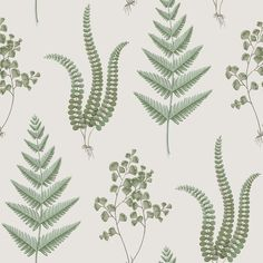 The wallpaper Herba - 4022 from Boråstapeter is wallpaper with the dimensions m x m. The wallpaper Herba - 4022 belongs to the popular wallpaper colle Fern Wallpaper, Botanical Wallpaper, Embossed Wallpaper, Striped Wallpaper, Wallpaper Samples, Wallpaper Roll, Pattern Wallpaper, Washable Wallpaper, Boutique Deco