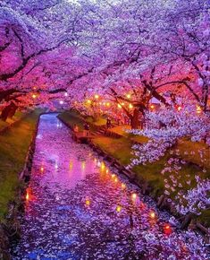 We are taking about the most beautiful places in which Japan is also counted. This place is more like Heaven and have a attractive look.S tourist visit japan in the spring and winter. The cherry blossom is grown everywhere in the spring. We hop Beautiful Places To Travel, Wonderful Places, Cool Places To Visit, Beautiful World, Japan Places To Visit, Heavenly Places, Romantic Travel, Beautiful Things, Beautiful Nature Wallpaper
