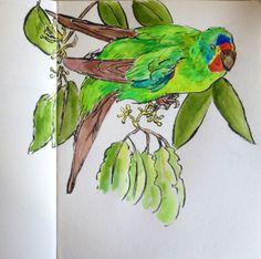 Swift Parrot, Pentel Pocket Brush Pen & Gouache by Liz Carlson Arts & Illustration 2014