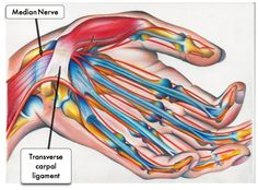 Everything You Need To Know About Carpal Tunnel Syndrome - Sheffield Physiotherapy Carpel Tunnel Syndrome, Median Nerve, Carpal Tunnel, Greek Words, Need To Know, Neurology, Health, Bones, Gap
