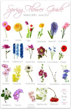 30 Flower Pictures And Names List Pinfographics Pinterest