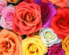Roses in any and every color