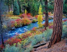 Photo/image/picture of Bend Oregon's Shevlin Park in its autumn glory