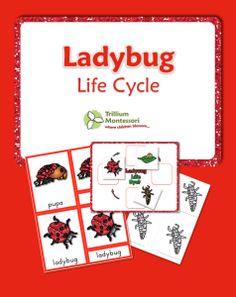 Ladybird homework helpers pack