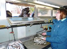 Ein Tag bei den Tieren - das etwas andere Zooerlebnis | Zoo Heidelberg Vorbereiten von Fisch bei den Mähnenrobben