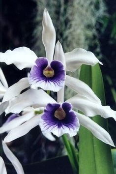 Orchidee #orchidee #orchidsinfo #flower #orchid # beautiful