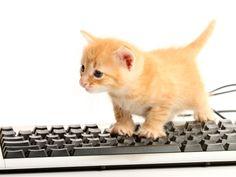 Internetphänomen Katzen: Dieses Katzenbaby macht sich nichts draus – Bild: Shutterstock / 6493866629    www.einfachtierisch.de