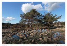Wetland (1158)