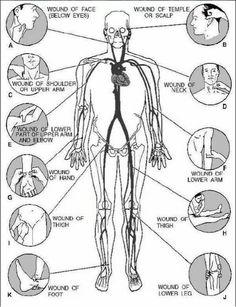 Pressure points to stop bleeding