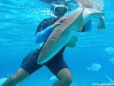 Nurkowanie w Morzu Karaibskim