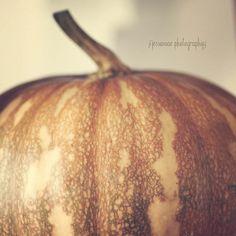 Pumpkin Photography  'The Golden Pumpkin'