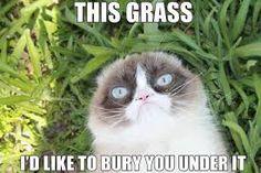grumpycat - Google Search