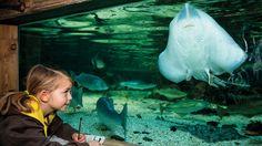 Book tickets to SEA LIFE  Kansas City Aquarium online in advance to guarantee…