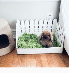 Bunny Beds, Pet Bunny Rabbits, Bunny Room, Bunnies, Diy Bunny Toys, Diy Bunny Cage, Bunny Cages, Animal Room, Animal Decor