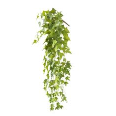 Green Hanging Ivy, 48'' Decorating Small Spaces, Green Plants, Artificial Plants, Houseplants, Ivy, Greenery, Decoration, Herbs, Canning