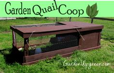 Quail Run - Can house up to 15 - 20. Straight on the ground move when needed. Quail are a great match for the garden.