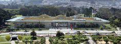 Vista Panorámica de la Academia de Ciencias de California. (San Francisco, CA.)