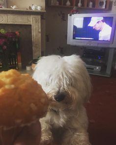 Murray Muffin! #wimbledon2016 #muffins #andymurray #angus #dogs #tennis