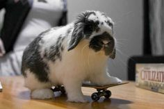 22 Of The Most Totally Extreme (And Adorable) Skateboarding Animals