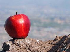 La manzana de la ciudad