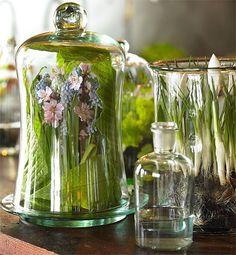 Under glass: flowers under glass arrangement | under glass display a clutch of woodland favourites under a bell jar ...