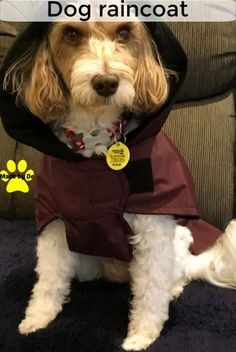 If your dog gets wet, it's much harder to stay warm.  In that instance, a waterproof dog coat would be a good idea. Waterproof Dog Coats, Waterproof Fabric, Dog Smells, Dog Winter Coat, Dog Raincoat, Dog Activities, Stay Warm, Flannel, Pup