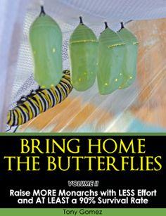 How to Raise Monarch Butterflies ebook