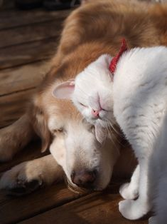 Gatos y perros. Cats and dogs Animals And Pets, Funny Animals, Cute Animals, Baby Animals, I Love Cats, Cute Cats, Tier Fotos, Stuffed Animals, Animals Beautiful