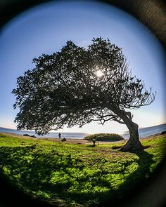 Tree at the sea's edge in San Pedro Golf Courses, San, In This Moment, Activities, Adventure, Life, Adventure Movies, Adventure Books