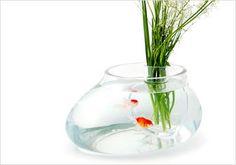 Vaso de Vidro com Aquário - Estúdio 5.5 Designers
