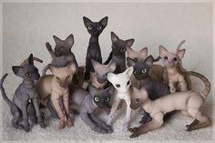 Bjd cats
