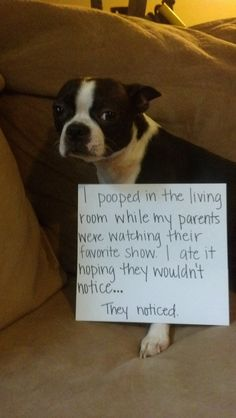 """""""I pooped in the living room while my parents were watching their favorite show. I ate it hoping they wouldn't notice…   They noticed."""""""