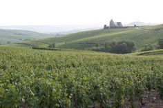 Champagne LAHERTE Frères. A quelques kms d'Epernay, à Chavot, découvrez la 6ème génération de viticulteurs et les spécificités d'un champagne de vignerons. Champagne Laherte frères 3, rue des Jardins  51530 CHAVOT I Tél. +33 (0)3 26 54 32 09  - Proximité de Courcelles : à 68 kms (environ 1h).