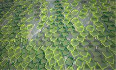 Folhas fotovoltaicas são criadas com base em planta trepadeira
