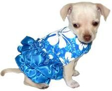 blue Hawaiian outfit for your dog