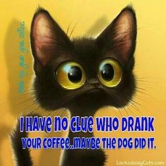 Coffee Humor | Blames everything on the dog! Fools me every time! | #coffee #cat