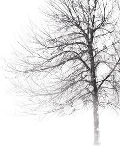 Whiteout - Winter, Black and White Photography, Snow, Blizzard, Storm, Tree Photograph, Landscape Print, Nature