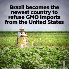 "GMO News: Brazil has joined the growing list of more than 30 countries that are refusing GMO imports from the United States.   ""This could be a major game changer, as Brazil leads the world production of sugar cane and is the second largest producer of soybeans.""   Read more: http://www.fooddemocracynow.org/blog/2017/feb/28"