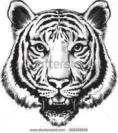 Black And White Tiger Tattoo Sketch