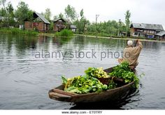 Kashmiri vegetables seller on canoe in dal lake ; Srinagar ; Jammu and Kashmir ; India - Stock Image