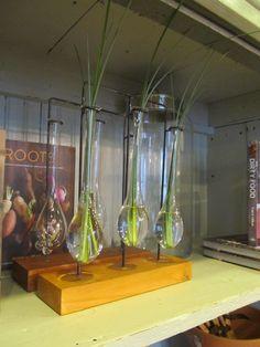 We love this three bulb vase!