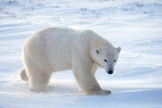 Ciencias de Joseleg: Zona polar Biomas
